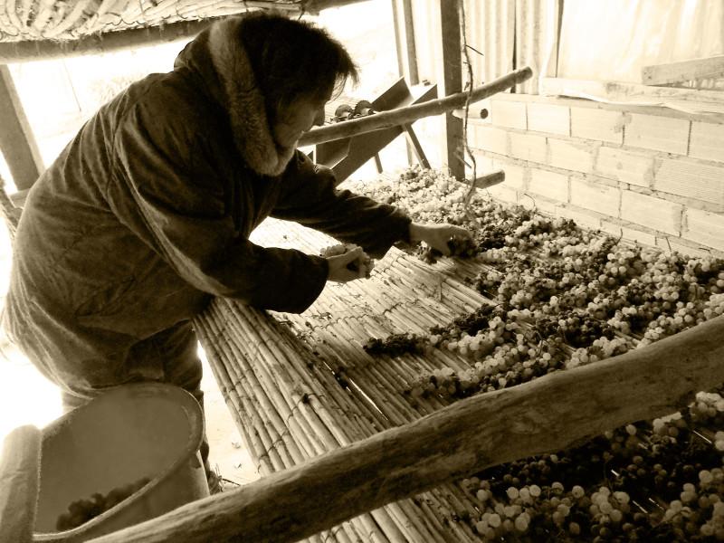 Preparazione uva per vinsanto
