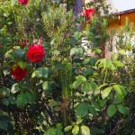 le nostre fioriture