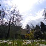 Il giardino di fronte agli alloggi 1
